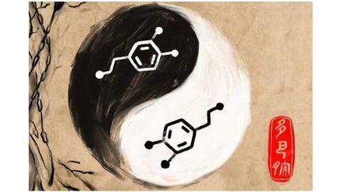 The Yin-Yang of Dopamine