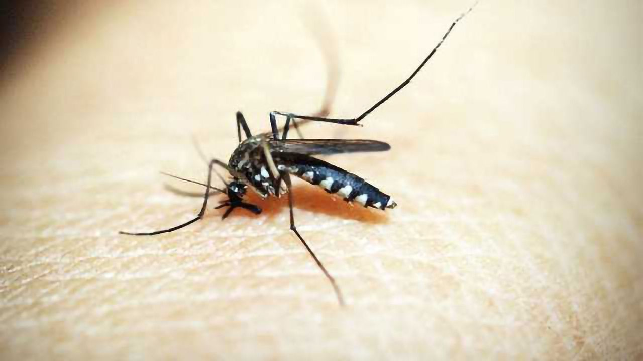 Zika Vaccine Protects Mouse Fetuses Against Brain Infections and Malformations