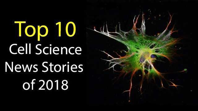 Top 10 Cell Science News Stories of 2018
