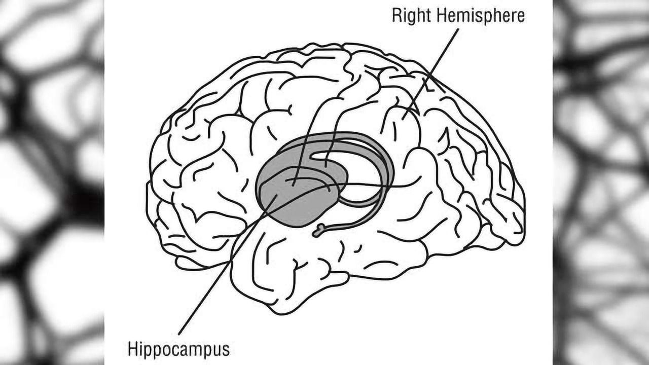 Stem Cell-derived Neurons Stop Seizures, Improve Cognitive Function