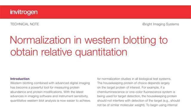 Normalization in Western Blotting to Obtain Relative Quantitation