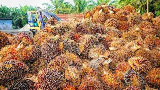 Palm Oil Sustainability Choices Need to be Easier for Consumers