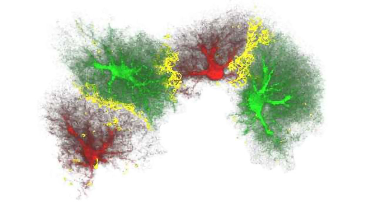 Notch, Nestin and Neurons