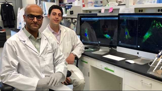 HIV Complications Potentially Linked to Faulty Immune Receptor