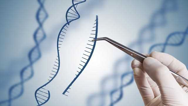 CRISPR Technique Refined for Potential Application in Muscular Dystrophy