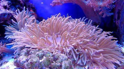 Coral Harmed by Effects of Sunscreen and Cosmetics Compound