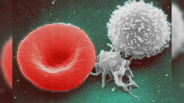 Bone Marrow Transplants Guided by Stem Cell Pathway Insights