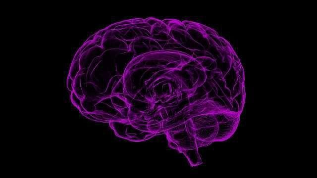 Revealing Gene Regulation in the Brain