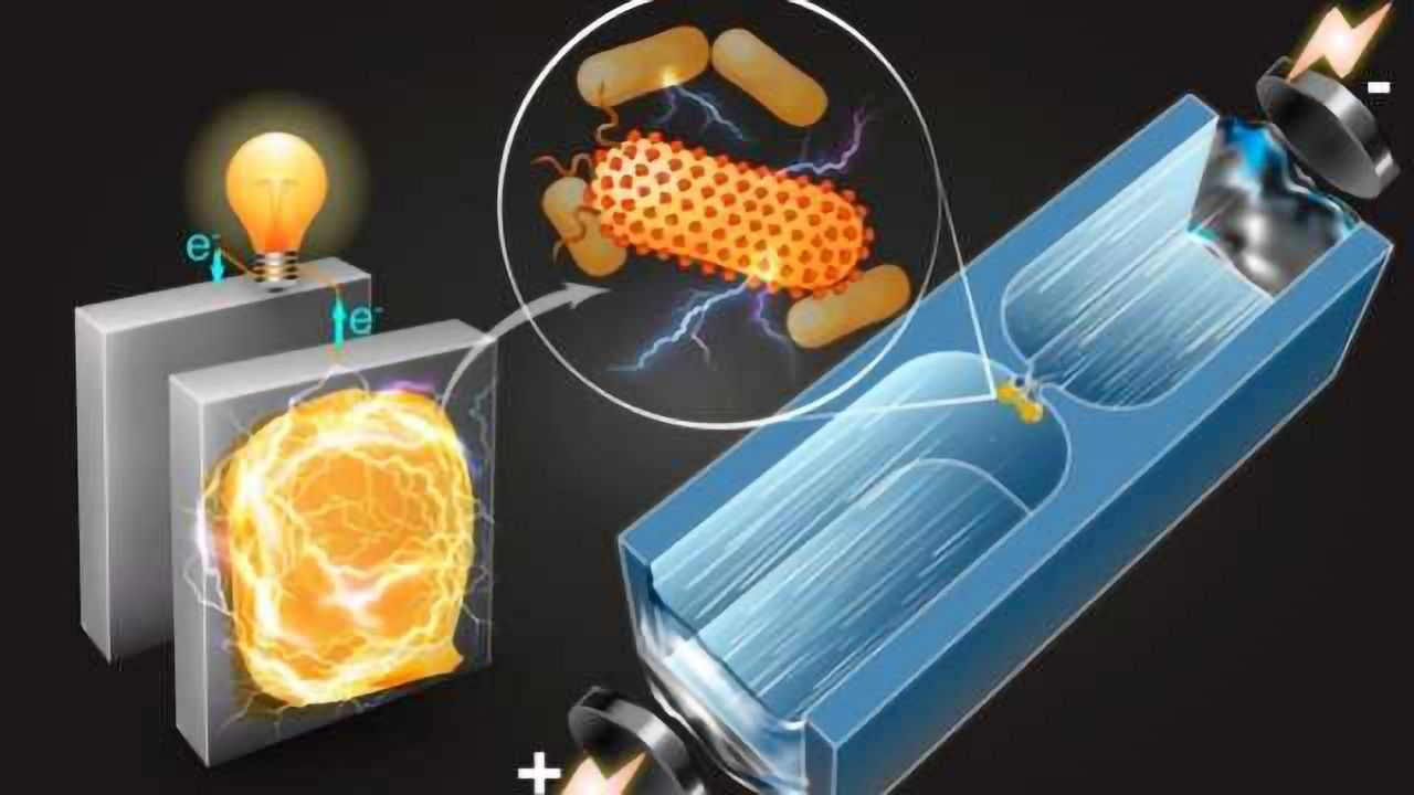 Electricity-producing Bacteria Identified Using Microfluidic Technique