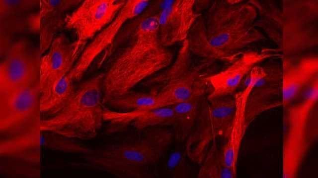 Long-sought Activator of Sigma-1 Receptors in Human Cells