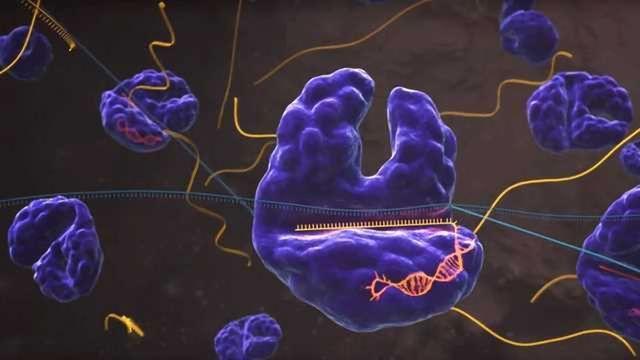 SHERLOCK: A CRISPR Tool to Detect Disease