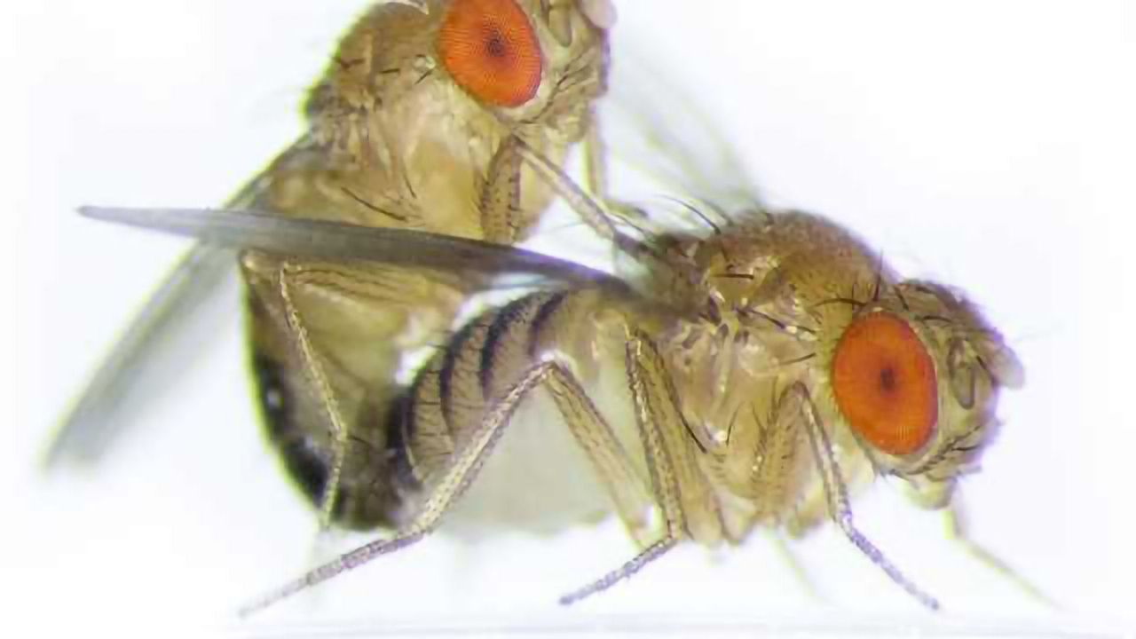 Female Fruit Flies' Sexual Partner Count Influences Selection