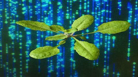 'Holy Grail' Sequencing Technique Shines Light on Transgenic Plants