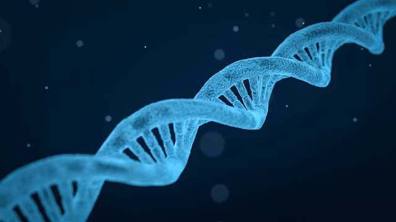 Genetic Variant Tells the Story of Skin Color Evolution