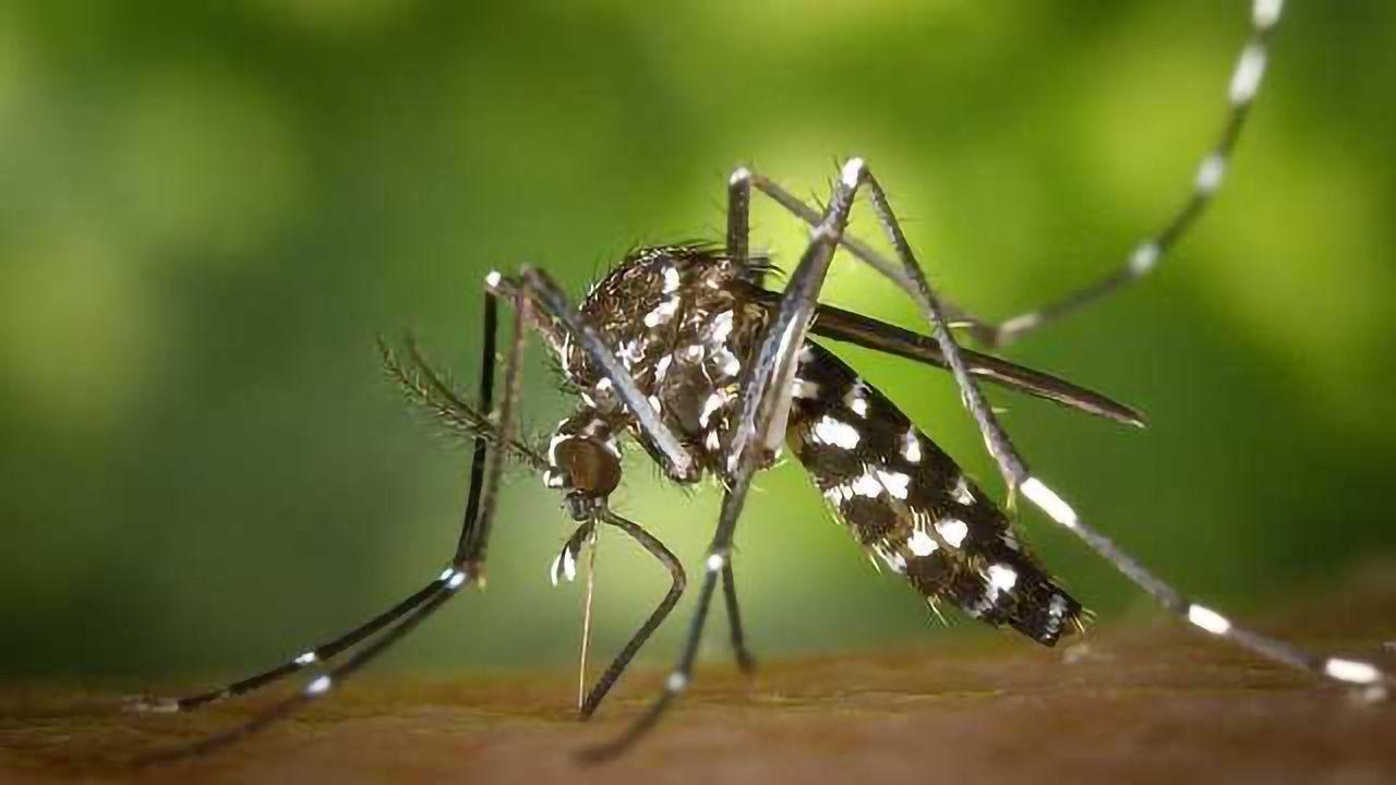 Is Malaria Eradication in Sight?
