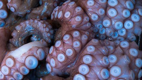 Far Reaching Impact of Octopus Farming