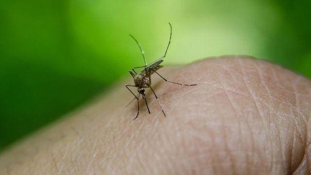 20 Genes Predict Severity of Dengue Fever