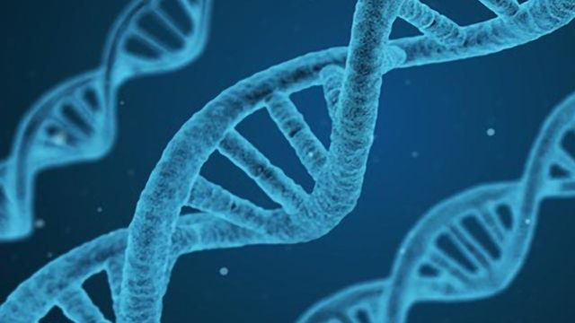 Genomic Screening Approach Developed to Aid Drug Discovery
