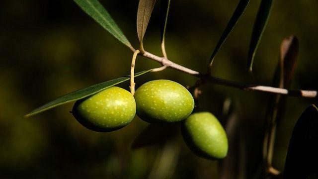 """""""Greener"""" Ways to Make Olives Edible"""