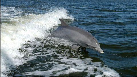 Microplastics Found in Every Marine Mammal Surveyed