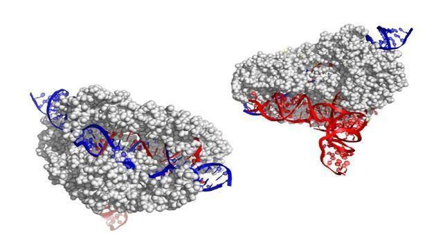 CasX: The New Kid on the CRISPR Block