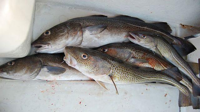 The Birth of the Codfish Antifreeze Gene