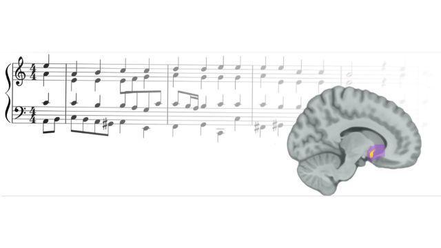 How Music Activates Our Brain's Reward Center