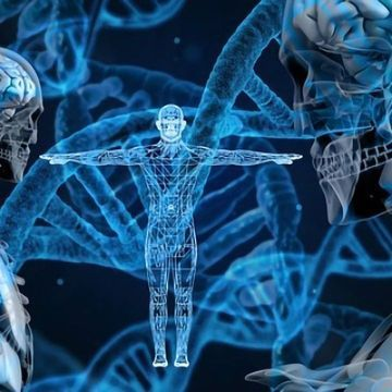 The Human Immune System Decoded