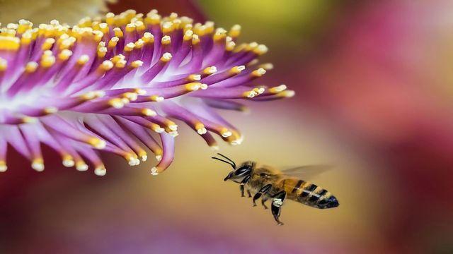 """Honeybee's """"Clean"""" Genes"""