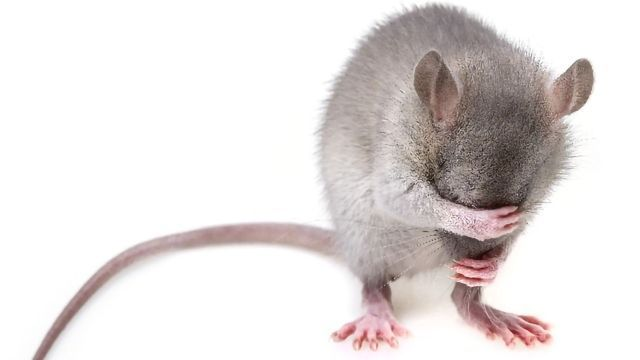 Depression Reversed in Male Mice by Activating a Gene That Helps Excite, Excitatory Neurons