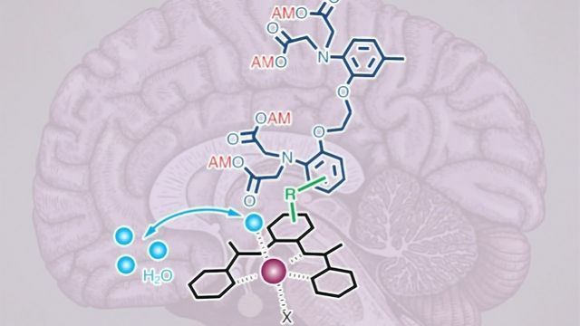 MRI Calcium Imaging Peers Deep into the Brain