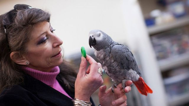 Bird Brain: Parrot Passes Classic Intelligence Test