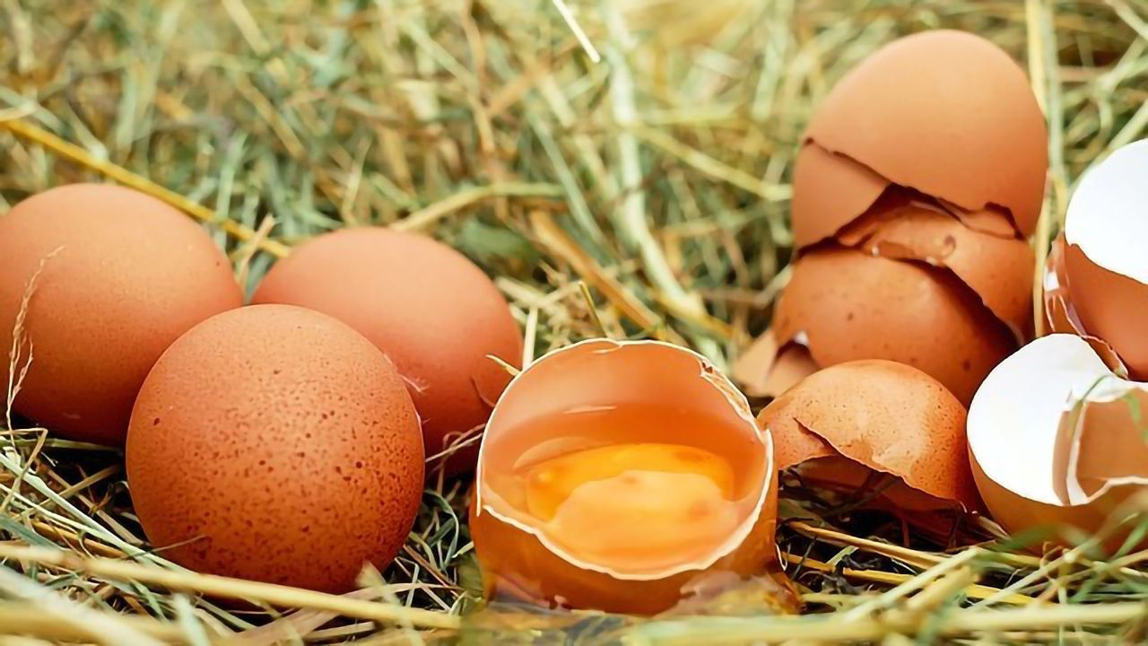 Better Egg Allergy Desensitization With Oral Immunotherapy