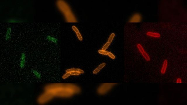 Real-time Footage of Living Bacteria Aids Antibiotic Hunt