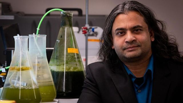 Making Fuel From Algae