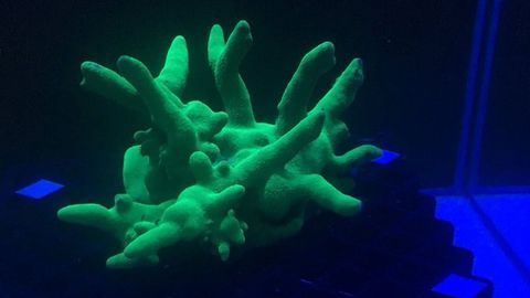 Coral Health Monitoring with Underwater Robots and Hyperspectral Imaging