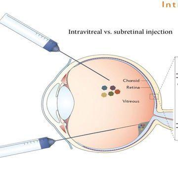 Blind Mice Regain Sight After Single Gene Insertion