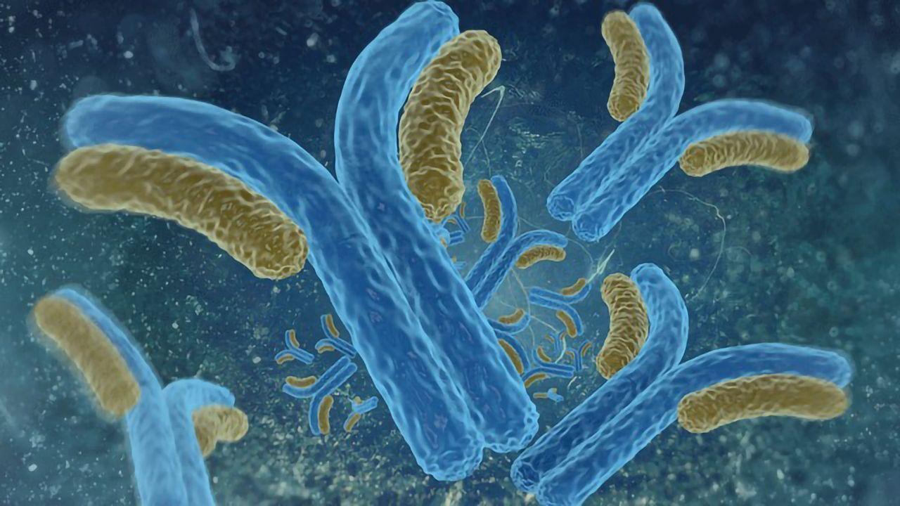 Antibodies Stabilize Plaque in Arteries