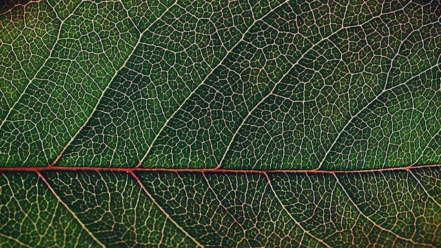 Revealing the Plant Genes That Shaped Our World
