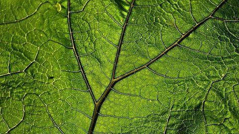 Cryo-EM Reveals Molecular Steps in Plant Immune Receptor Activation