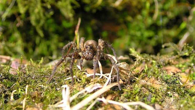 What Makes Spiders Fussy Eaters?