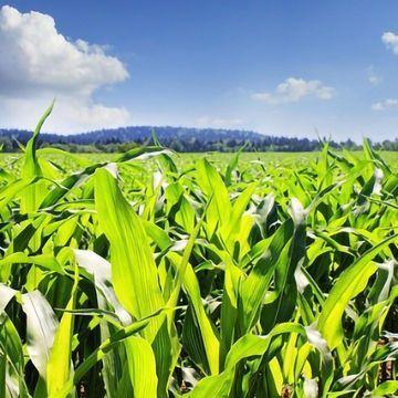 Improving Lignin Understanding Could Improve Crop Economy