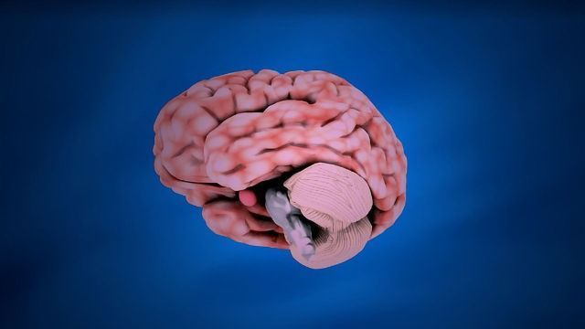 Navigator Neurons Play Critical Role In Sense Of Smell >> Brain Regions Linked To Memory And Emotion Help Humans Navigate