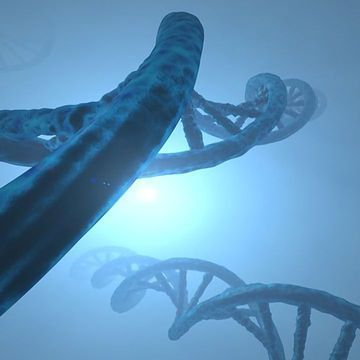 """Forget the """"Fountain of Youth"""", Longevity Lies in a Gene"""