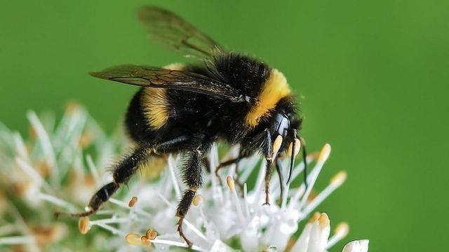 Pollination Problems From Polluting Pesticides