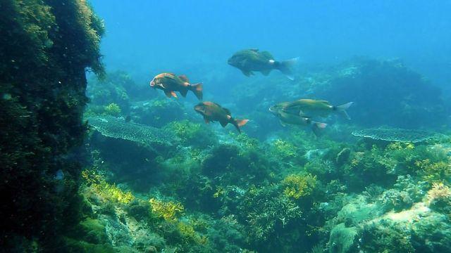 Far-reaching Consequences of Ocean Acidification