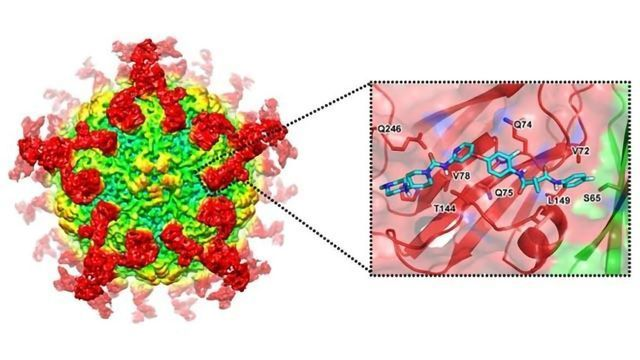 Designer Drugs to Inhibit Hepatitis A Virus