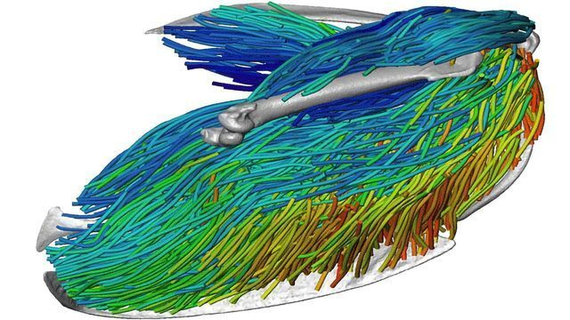An Unprecedented Look Into Flight-enabling Muscle Architecture