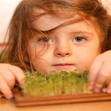 Chemical In Broccoli Sprouts May Treat >> Broccoli Compound May Restore Brain Chemistry Imbalance