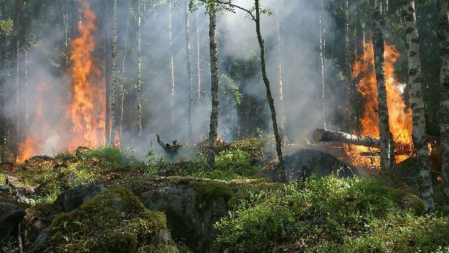 Software Tool Helps Fight Forest Fires